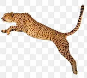 Cheetah - Cheetah Tiger Clip Art PNG