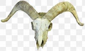 Goat - Goat Cattle Skull Horn Bone PNG