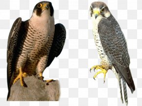 Falcon - Image File Formats Lossless Compression PNG