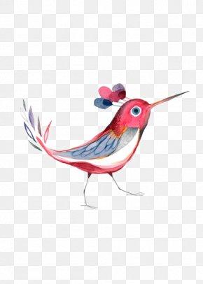 Hand-painted Birds - Hummingbird Illustration PNG
