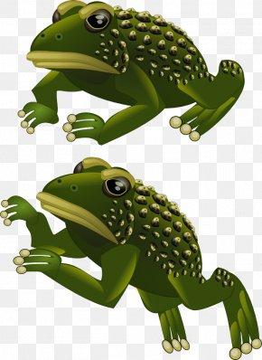 Frog - Toad True Frog 2D Computer Graphics Sprite PNG