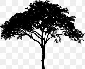 Tree Vector - Tree Woody Plant Black And White Monochrome Photography Branch PNG