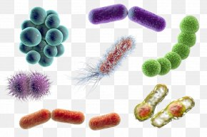 Microscope - Stock Photography Bacteria Microorganism Coccus E. Coli PNG