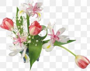 Mimosa - Birthday Holiday Flower .de .com PNG