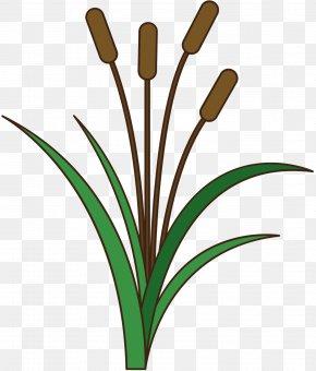 Clip Art Grasses Plant Stem Leaf Line PNG