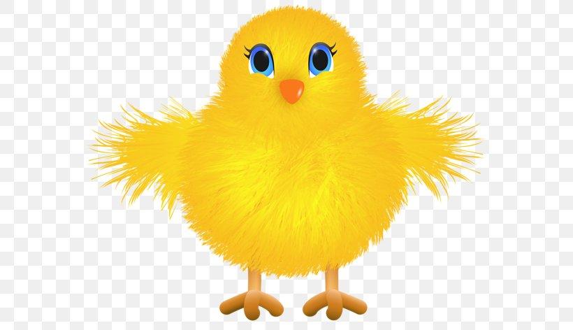 Barbecue Chicken Rhode Island Red Easter Kifaranga Clip Art, PNG, 600x472px, Barbecue Chicken, Beak, Bird, Buffalo Wing, Chicken Download Free