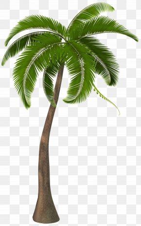 Palm Tree - Ghetto Wave Peezy Babyface Ray Steph Curry Young & Dangerous PNG