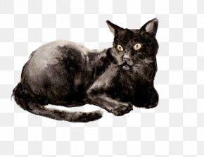 Black Cat - Korat Bombay Cat European Shorthair Havana Brown Burmese Cat PNG
