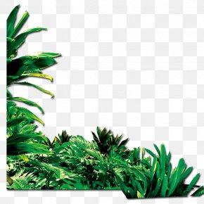 Green Grass - Green Google Images PNG