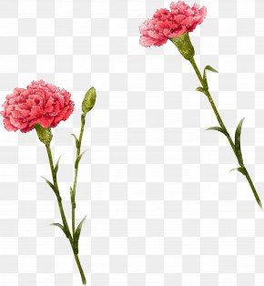 Cute I - Carnation Flower Illustration PNG