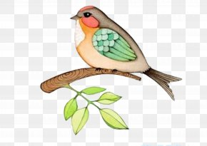 Cartoon Bird - Bird Watercolor Painting Drawing PNG