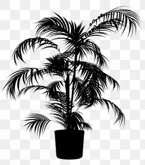 M Palm Trees Date Palm - Asian Palmyra Palm Babassu Black & White PNG