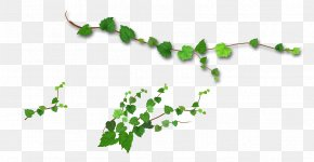 Realistic Tree Vine - Branch Leaf Tree PNG