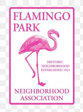 Bird - Il Fenicottero Beak Greater Flamingo Bird Animal PNG