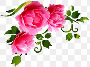 Flower - Garden Roses Cut Flowers Wall Decal Floral Design PNG