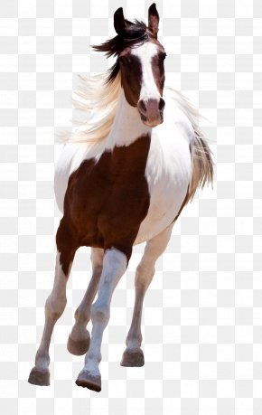 Horse - Mustang American Paint Horse Standing Horse PNG