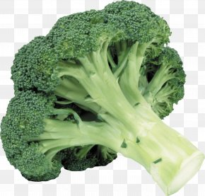 Broccoli - Broccoli Slaw Vegetable Clip Art PNG