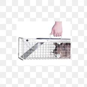 Mouse Trap - Trapping Cage American Mink European Rabbit Animal PNG