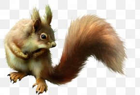 Real Cute Squirrel - Puppy Eastern Gray Squirrel Dog Pet PNG