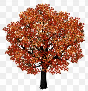 Red Maple Tree Clipart Picture - Red Maple Japanese Maple Autumn Leaf Color Clip Art PNG