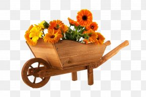 Marigolds And Trolleys - Wheelbarrow Flower Marigold Photography PNG