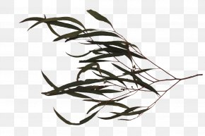Tree Branch With Leaves - Twig Black And White PNG