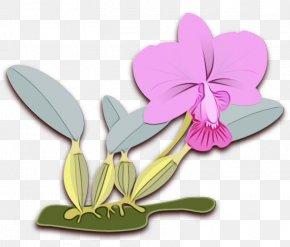 Cattleya Flowering Plant - Flower Violet Plant Petal Clip Art PNG