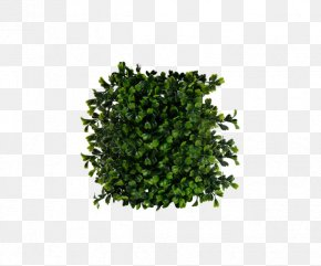Green Bushes - Shrub PNG