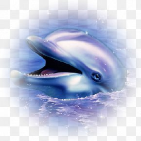 Dolphin - Common Bottlenose Dolphin Animal Drawing Clip Art PNG