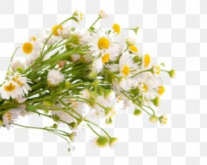 Flower - Common Daisy Flower Bouquet Royalty-free PNG