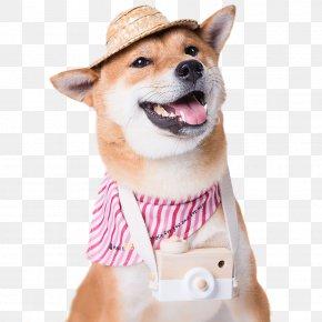 Meng Pet Dog - Labrador Retriever Cat Puppy Your Pet Dog PNG