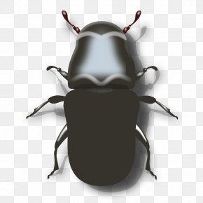 Beetle Cliparts - Mountain Pine Beetle Ladybird Clip Art PNG