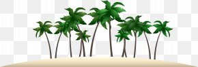 Palm Tree Beach Vector - Arecaceae Euclidean Vector Computer File PNG
