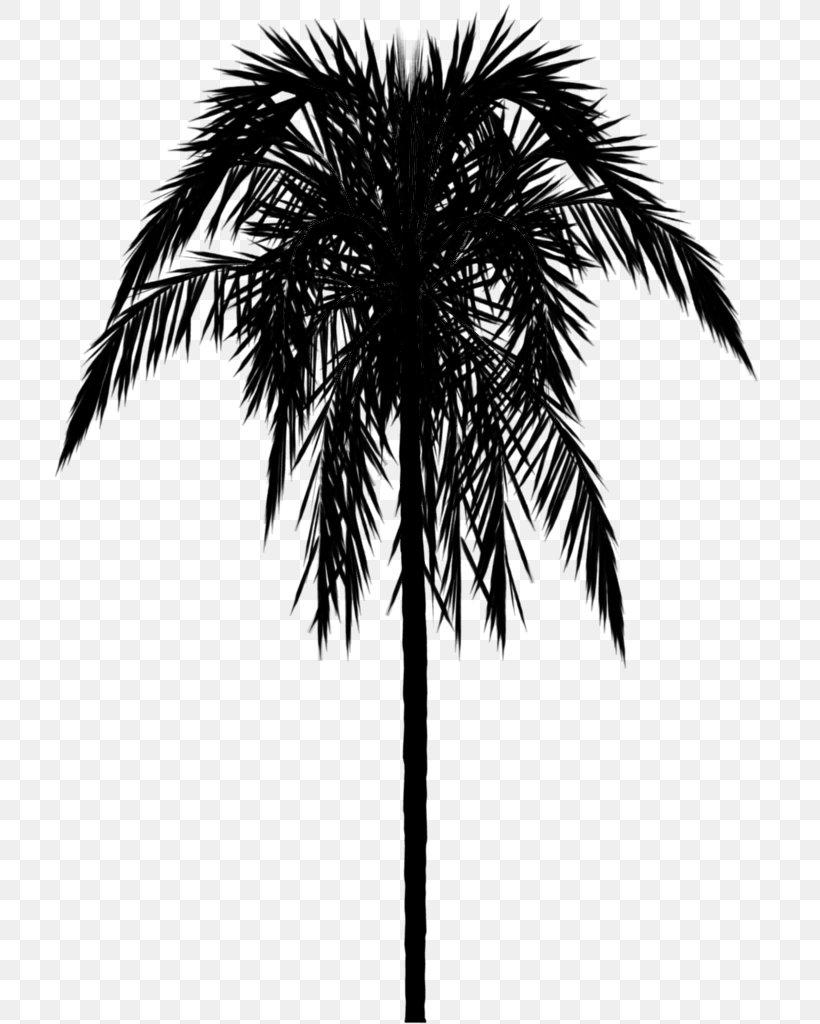 Wallpaper Border Palm Trees Babu