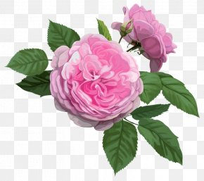 Pink Rose - Gambia Paper Flower Rosa Chinensis Postage Stamp PNG