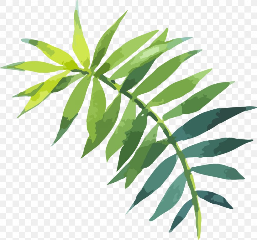 Leaf Watercolor Painting, PNG, 1110x1038px, Leaf, Color, Green, Hemp, Information Download Free