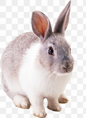 Rabbit Image - White Rabbit PNG