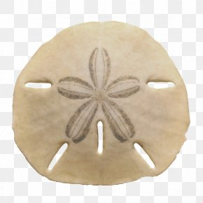 Creative Shells - Echinarachnius Parma Sea Urchin The Sand Dollar Seashell PNG