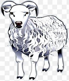 Goatantelope Livestock - Sheep Sheep Line Art Cow-goat Family Clip Art PNG