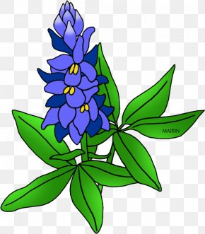 Herbaceous Plant Lupin - Floral Plant PNG