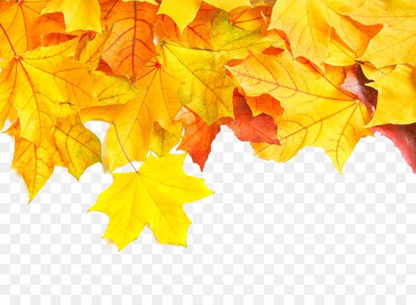 Autumn, PNG, 1000x732px, Leaf, Autumn, Desktop Metaphor, Digital Image, Fototapeta Download Free