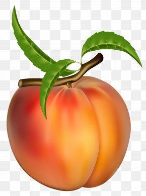 Peach Transparent Clipart Picture - Peach Fruit Apricot Clip Art PNG