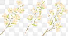 Watercolor Plum Blossom - Watercolor Painting Plum Blossom PNG