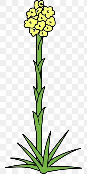Agave Plant Clip Art - Clip Art Cut Flowers Image PNG