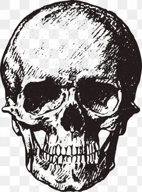 Sketch Style Skull - Skull Bone Human Skeleton Royalty-free Clip Art PNG