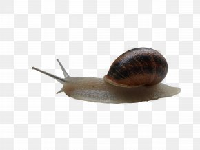 Snail - Snail Wallpaper PNG