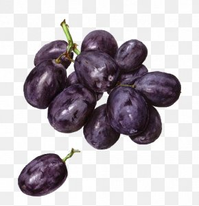 Grape - Concord Grape Watercolor Painting Drawing PNG