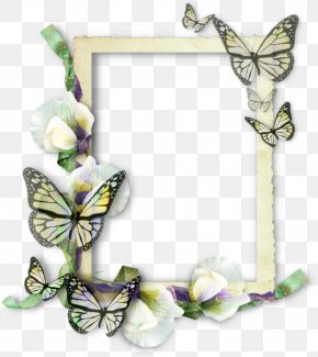 Butterfly Frame - Butterfly Picture Frames Molding Insect PNG