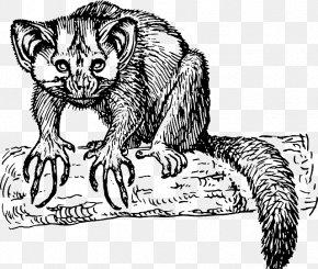Lemur Aye-aye Primate Clip Art PNG