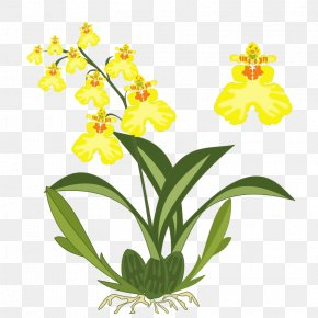 Orchids Images For Free - Dancing-lady Orchid Plant Cattleya Orchids Clip Art PNG